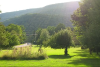 Maple Tree Farm yard